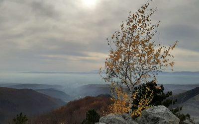 Sanja Duvnjak  – Mala breza s Papuka